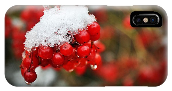 IPhone Case featuring the photograph Winter Berries by Ryan Wyckoff