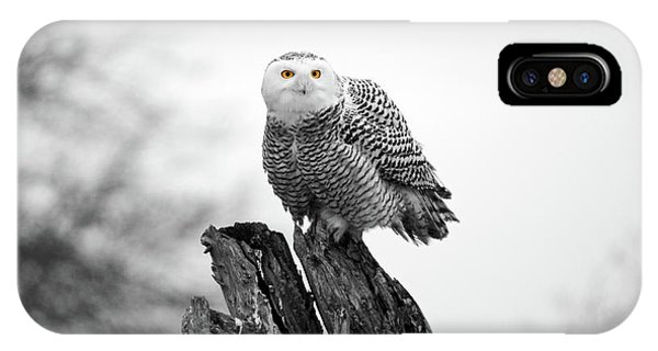 Winter Snowy Owls Phone Case by Pierre Leclerc Photography