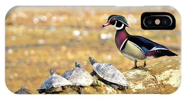 Wood Duck And Four Friends IPhone Case