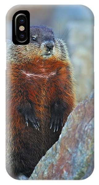 Groundhog iPhone Case - Woodchuck by Tony Beck