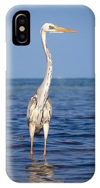 Wurdemann's Heron IPhone Case