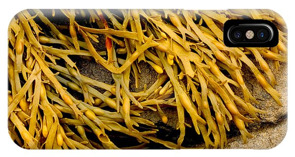 Yellow Kelp IPhone Case