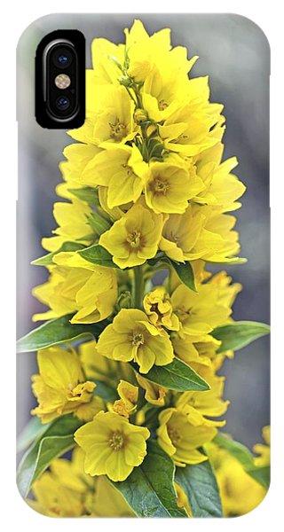 Yellow loosestrife lysimachia vulgaris photograph by dr keith wheeler yellow loosestrife lysimachia vulgaris phone case by dr keith wheeler mightylinksfo