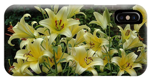 Yellow Oriental Stargazer Lilies IPhone Case