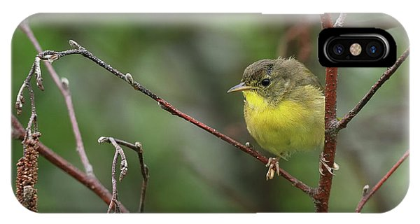 Warbler iPhone Case - Yellowthroated Warbler by Susan Capuano