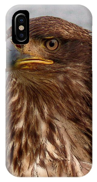Young Bald Eagle Portrait IPhone Case