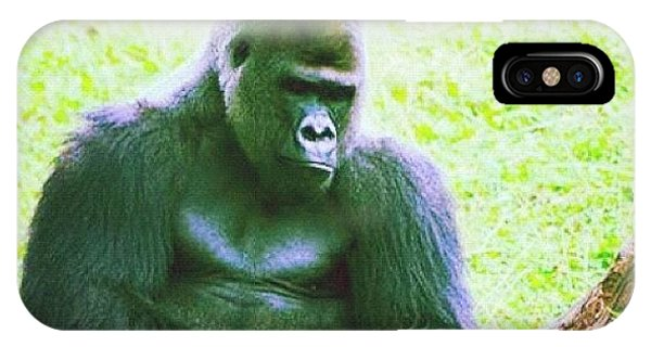 Cause iPhone Case - #zoo #wildlife #gorilla #ape #summer by Susan McGurl