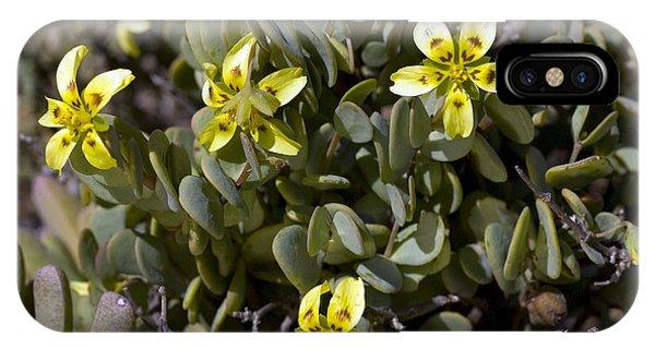 Zygophyllum Cordifolium Flowers Phone Case by Bob Gibbons