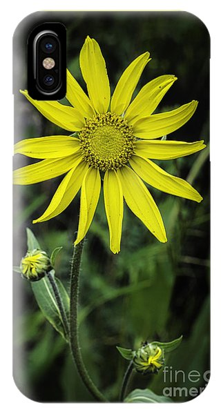 IPhone Case featuring the photograph  Arnica Montana by Bitter Buffalo Photography