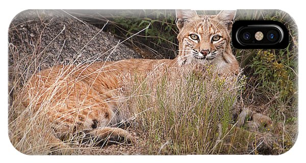 Bobcat At Rest IPhone Case