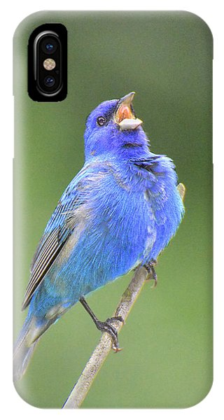 Hear The Indigo Bunting Sing IPhone Case