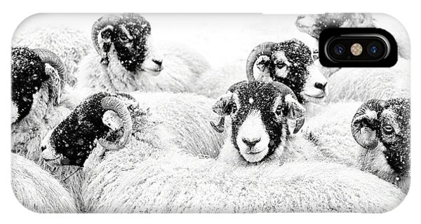 Sheep iPhone Case -  In Winters Grip by Janet Burdon