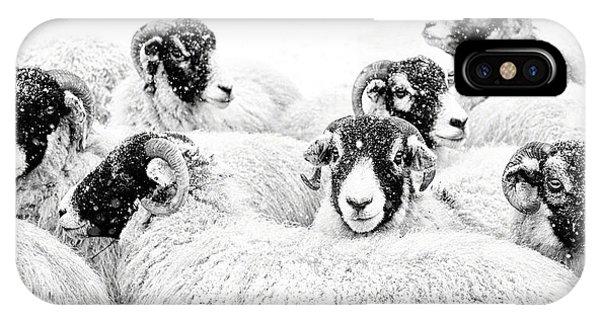 Sheep iPhone X / XS Case -  In Winters Grip by Janet Burdon