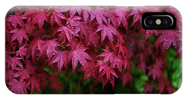 Japanese Maple Rain IPhone Case