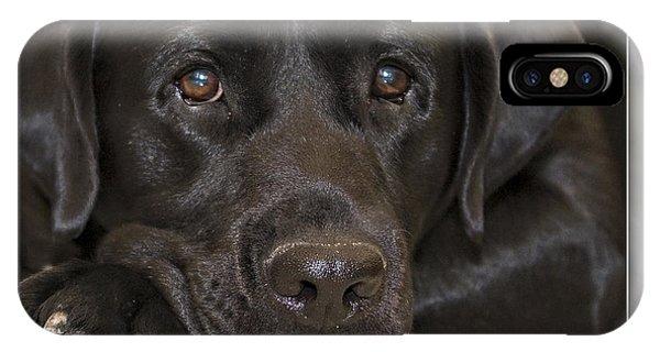 Labrador Retriever A1a IPhone Case