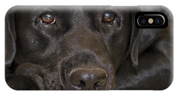 Labrador Retriever A1b IPhone Case