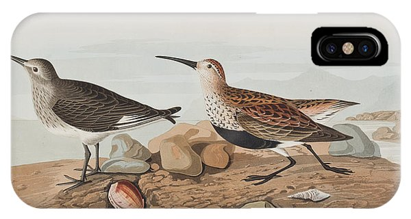 Sandpiper iPhone Case -  Red Backed Sandpiper by John James Audubon