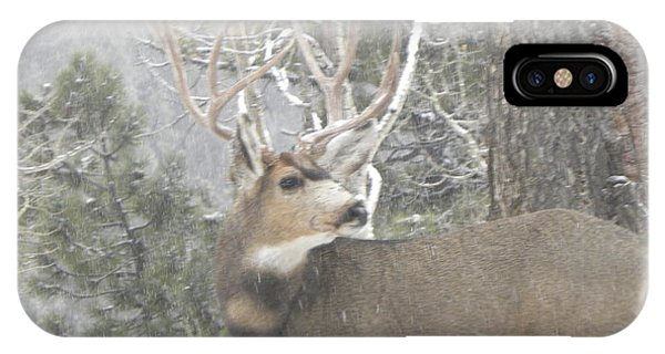 Buck Front Yard Divide Co IPhone Case