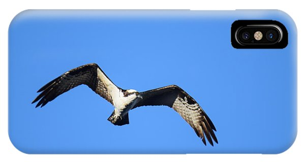 IPhone Case featuring the photograph Osprey Burgess Res Divide Co by Margarethe Binkley