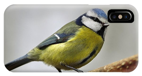 IPhone Case featuring the photograph     Blue Tit by Gavin Macrae