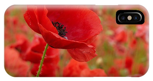 Red Poppies 3 IPhone Case
