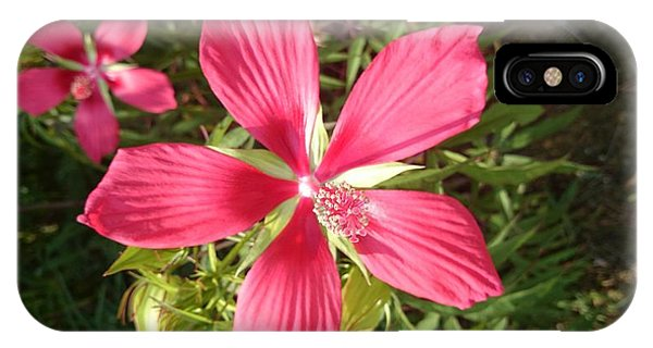 Hibiscus Coccineus IPhone Case