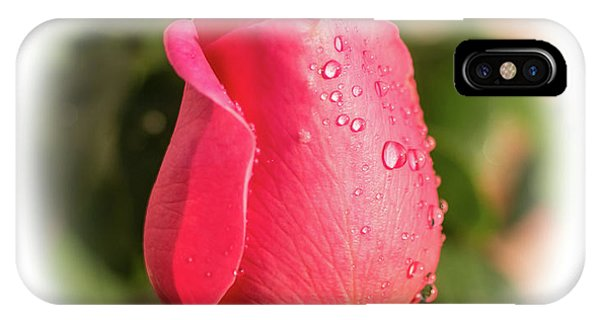 A Rose For Love IPhone Case