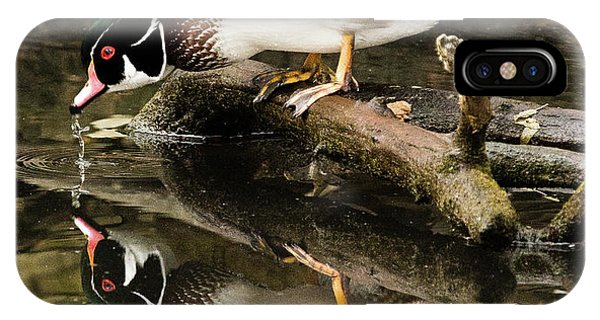 A Sip For You And Me Wildlife Art By Kaylyn Franks IPhone Case