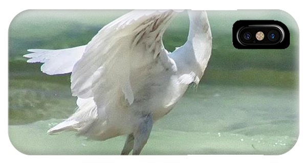 Scenic iPhone Case - A Snowy Egret (egretta Thula) At Mahoe by John Edwards