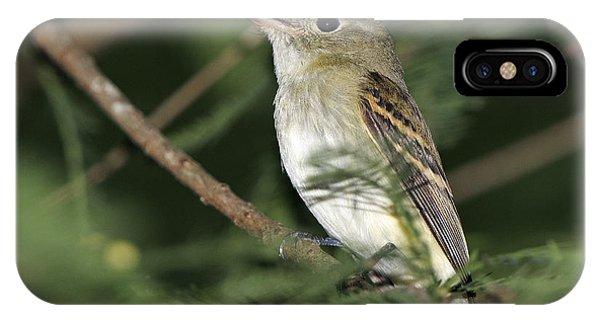 Acadian Flycatcher IPhone Case
