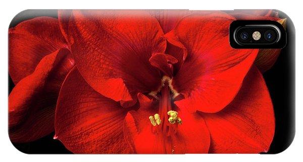Amaryllis 'merry Christmas IPhone Case