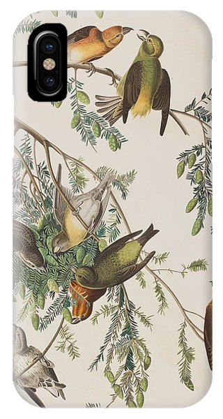 American Crossbill IPhone Case