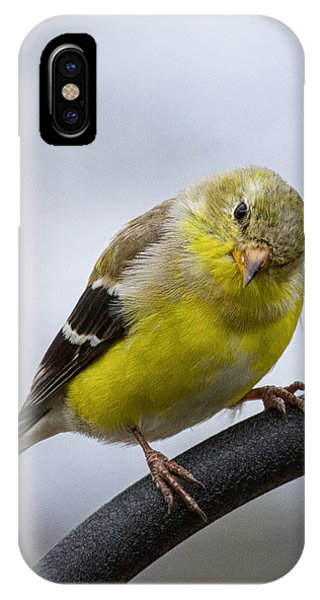 American Goldfinch IPhone Case