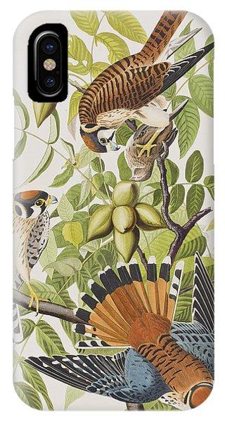 American Sparrow Hawk IPhone Case