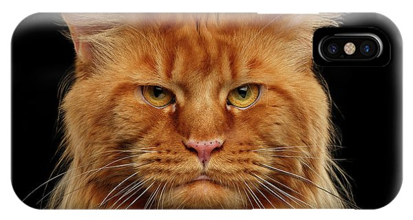 Cat iPhone X / XS Case - Angry Ginger Maine Coon Cat Gazing On Black Background by Sergey Taran