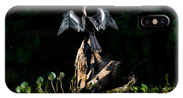 Anhinga iPhone Case - Anhinga Anhinga Anhinga, Pantanal by Panoramic Images