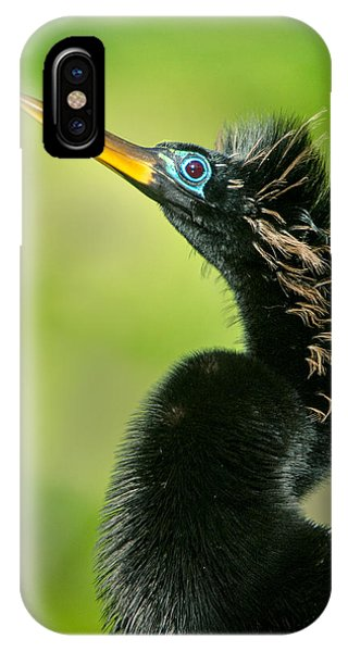 Anhinga iPhone Case - Anhinga Anhinga Anhinga, Tortuguero by Panoramic Images