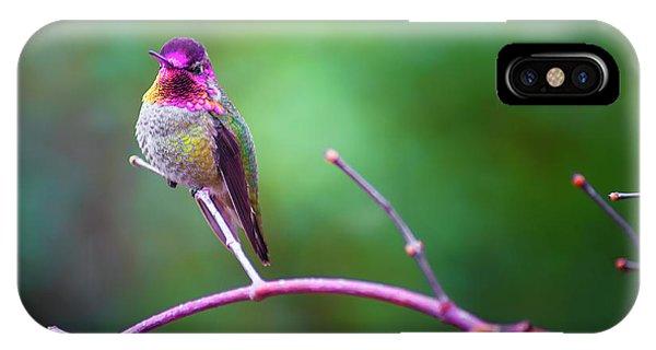 Anna Hummingbird Vii IPhone Case