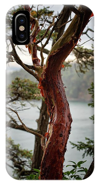 Arbutus Tree IPhone Case