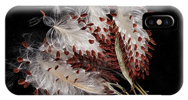 Asclepias Currasavica--seed Pod IPhone Case