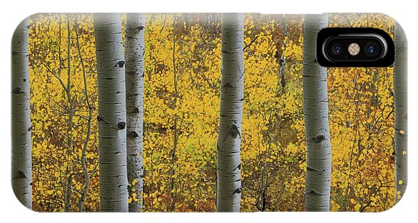 Aspen In Autumn At Mcclure Pass IPhone Case