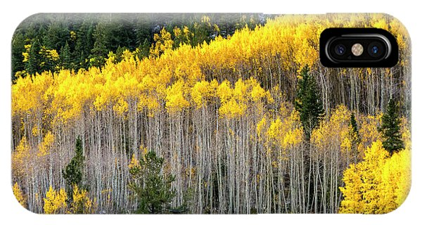 Aspen Trees In Fall Color IPhone Case