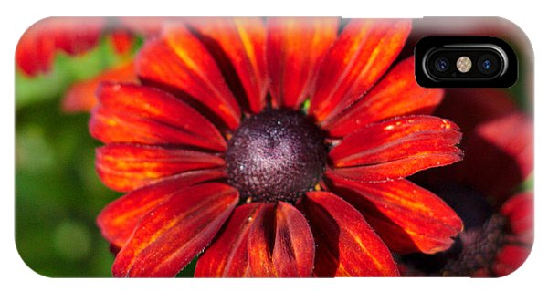 IPhone Case featuring the photograph Autumn Flowers by Jeremy Hayden
