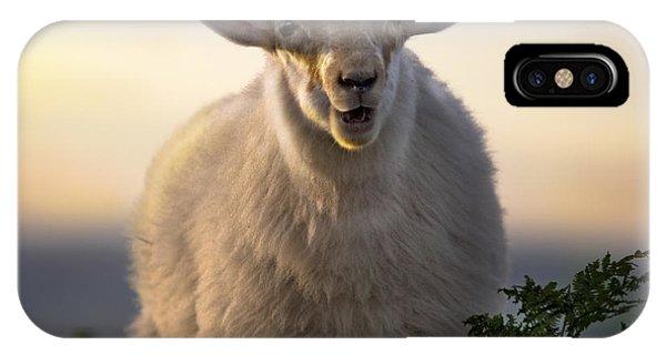 Sheep iPhone X / XS Case - Baa Baa by Angel Ciesniarska