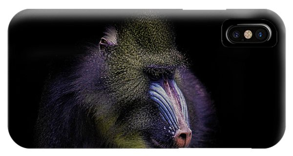 East Africa iPhone Case - Baboon Portrait by Martin Newman
