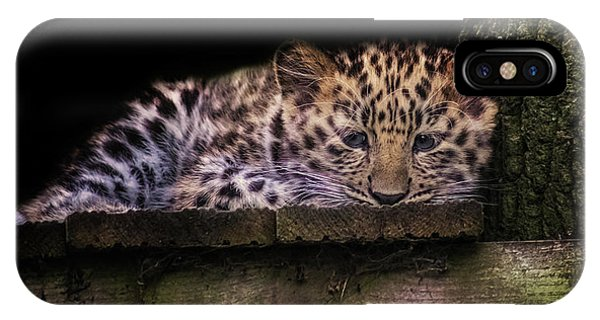 Snow Leopard iPhone Case - Baby Amur Leopard by Martin Newman