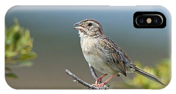 Bachman Sparrow IPhone Case