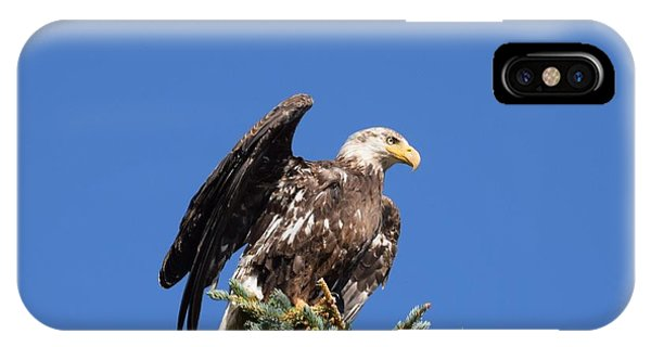 IPhone Case featuring the photograph Bald  Eagle Juvenile Ready To Fly by Margarethe Binkley