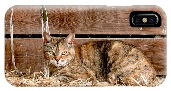 School iPhone Case - Barn Cat by Jason Freedman