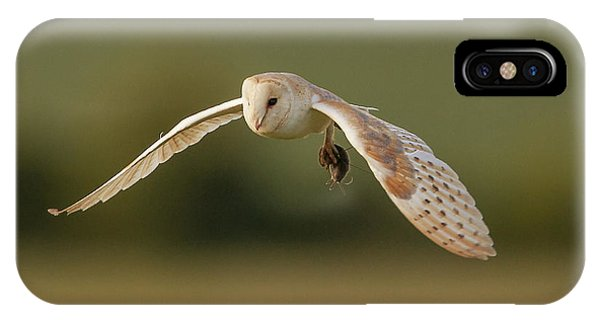 Barn iPhone Case - Barn Owl by Paul Neville
